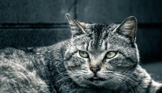 近所にいる野良猫の肝が据わっている理由と餌やりおばさんに対して思う事