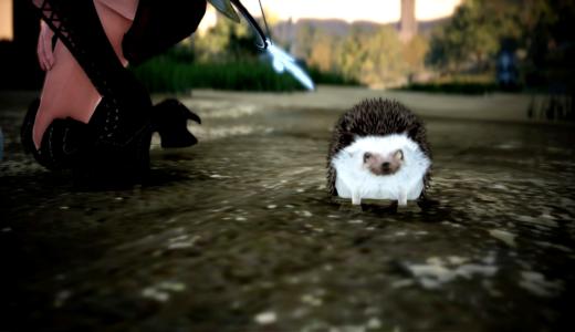 【PS4版黒い砂漠】採集のお供!ハリネズミの特技をご紹介